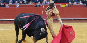Prohíben corridas de toros en Guerrero