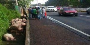 Caos vial por volcadura de camioneta en Chamapa-Lechería