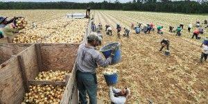 Indocumentados en EE.UU. sufren abuso laboral