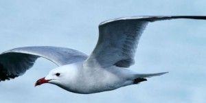 Calentamiento global desplaza a aves en Estados Unidos