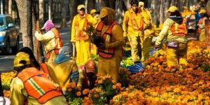 El Paseo de la Reforma se viste con flores de Día de Muertos
