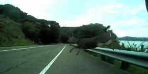 Ciclista choca con un venado